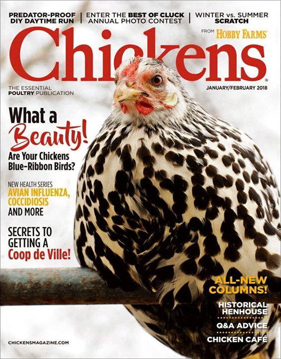 Chickens Magazine Cover